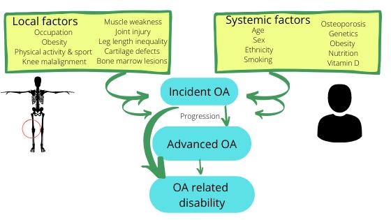 factors OA