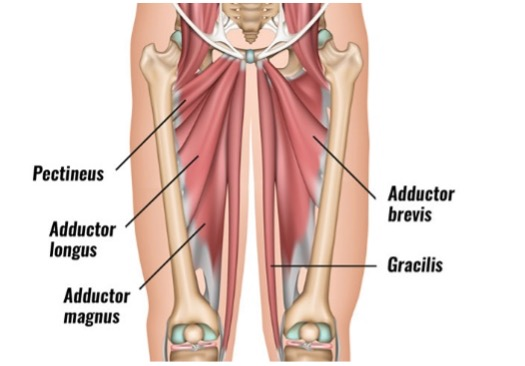 Adductor-related pain physio